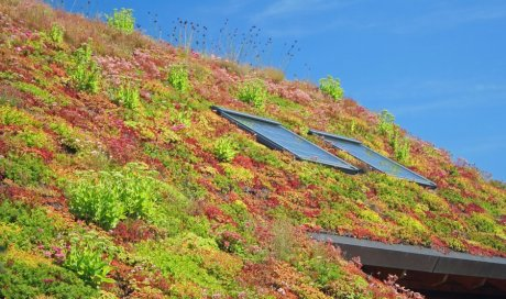 Professionnel pour la création d'un toit végétalisé en milieu urbain Replonges et Saint‑Fons